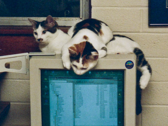 two cats stacked on top of a CRT