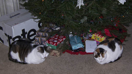 Two cats sleeping under a xmas tree