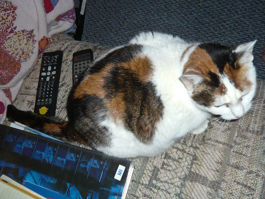 cat hemmed in by remotes and books
