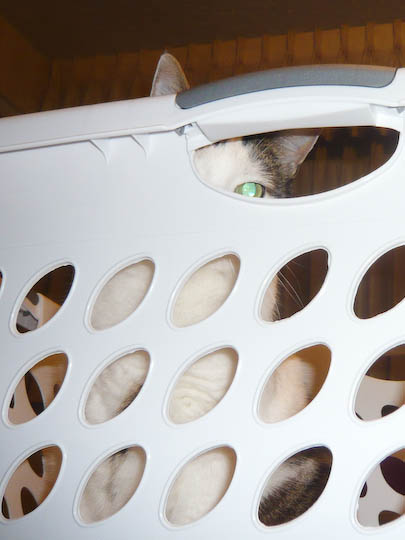 Cat peeking through the handle of a laundry basket