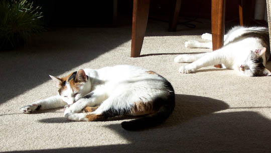 Cats lounging in the sun