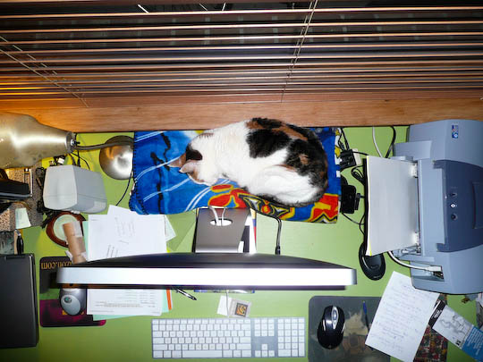 Cat asleep behind imac