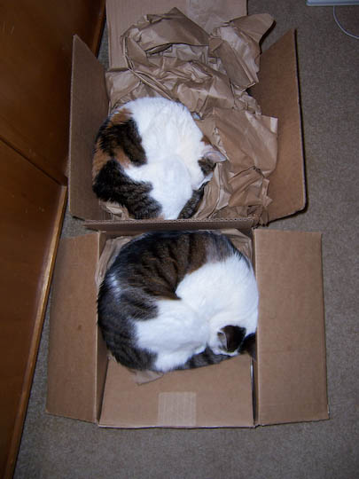 cats curled in boxes