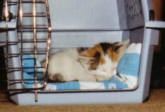 kitten asleep in carrier