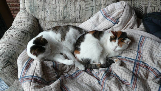 two cats curled on a blanket