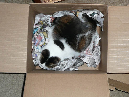 Cat in a box full of paper